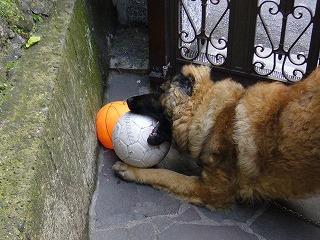 ベルとボール